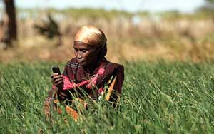 A farmer checks her mobile phone before deciding whether to harvest her crops. Photo: Panos/Piers Benatar