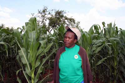 While Sophie Mabhena may be embracing the South African government's policy to implement biotechnology in farming by growing genetically modified maize, anti-GM experts caution that this does not necessarily lead to food security. Credit: Busani Bafana/IPS