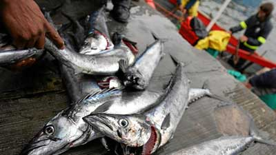 African Forest and Fisheries