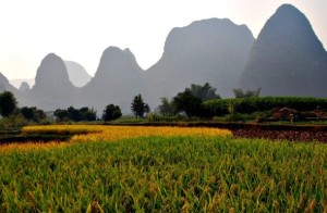 Crops growing in the Chinese countryside  Vera and Jean-Christophe under a [ https://creativecommons.org/licenses/by/3.0/ ]Creative Commons Licence