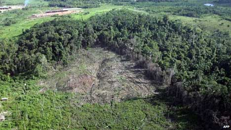 Area cleared of trees in the Anapu region in northern Brazil (04/2005) The rate of deforestation increased by 29% in the year to July 2013