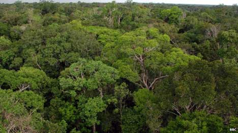 The Amazon rainforest is responsible for absorbing tonnes of greenhouse gases from the atmosphere
