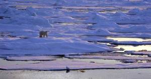 """Polar bear on sea ice. Alaska, Beaufort Sea."" (Photo: [ https://www.flickr.com/photos/noaaphotolib/5277241065 ]NOAA Photo Library)"