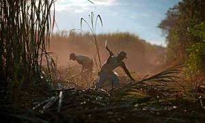 Two men work in the fields of the San Antonio sugar mill in Chichigalpa, Nicaragua. Photograph: Estban Felix/AP