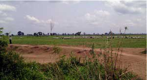 Lands of Gassol community that have been allocated to Dominion Farms. The photo shows the link road constructed by UBRBDA and the use of the lands for grazing by the local community. (Photo: CEED)