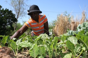 Women from Zimbabwe's Lupane District invest the profits of their craft sales in 'keyhole' gardens to ensure food security. Credit: Busani Bafana/IPS
