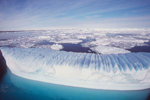 Australian Antartic Division/Reuters