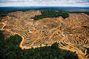Land cleared for palm oil plantations in Tasmania. Mattias Klum