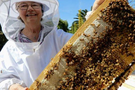 beekeeping 7 CROP